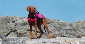 hund mit hundeschwimmweste