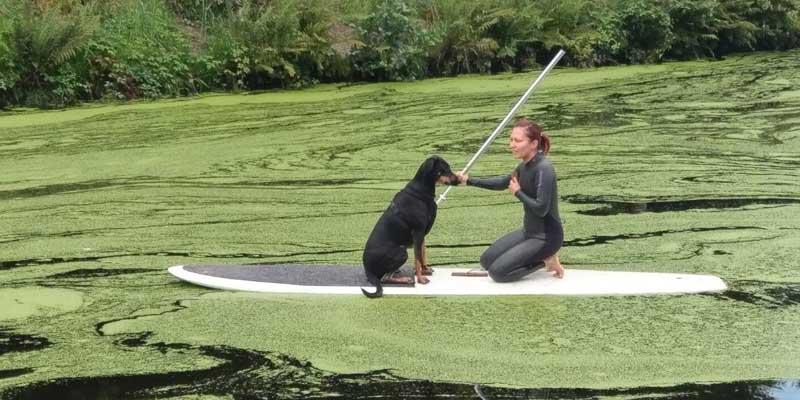 ganz idyllisch und vertraut: Jenny mit Hund auf dem SUP